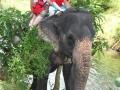 olifant (2)