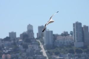 San Francisco op de achtergrond