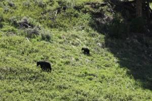 Ik zag 2 beren ....